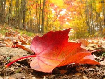 El mejor secreto es aquel del que no se habla pero permanece vívido en nuestra mente marcando un camino...